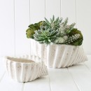 Conch-Bowl-by-MUSE Sale