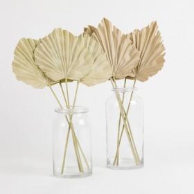 Dried-Fan-Palm-Stem-by-MUSE on sale