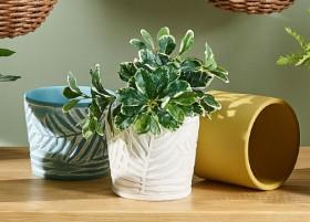 30-off-Ceramic-Planter-Pots-12-x-14cm on sale