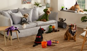 NEW-Tails-Pet-Costumes on sale