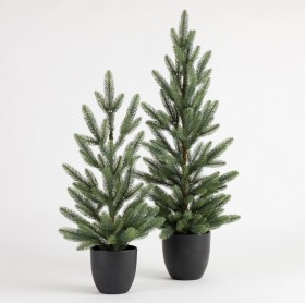 Mini-Potted-Christmas-Tree-by-Habitat on sale
