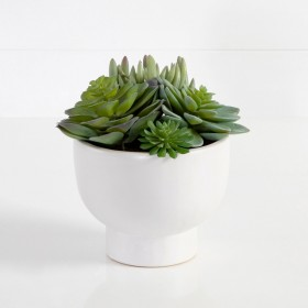 30-off-on-All-Potted-Succulents-Succulent-Stems on sale